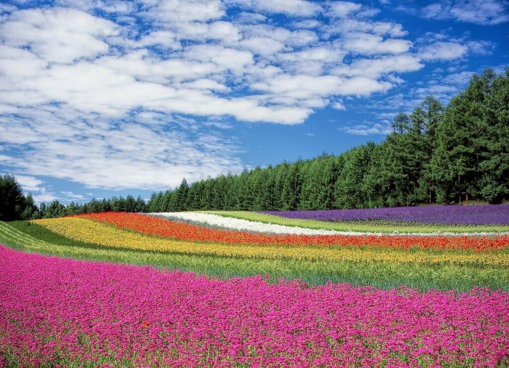 olor-flores-aroma-abejas-2