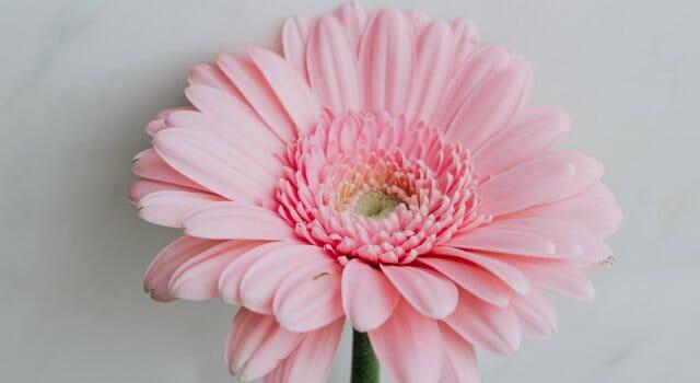 a que huelen las flores