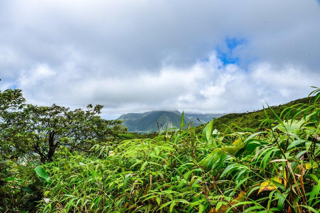 volcán La Soufriere selva