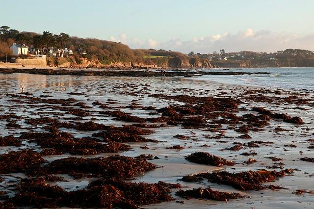 algas-nocivas-marina- playa-costa