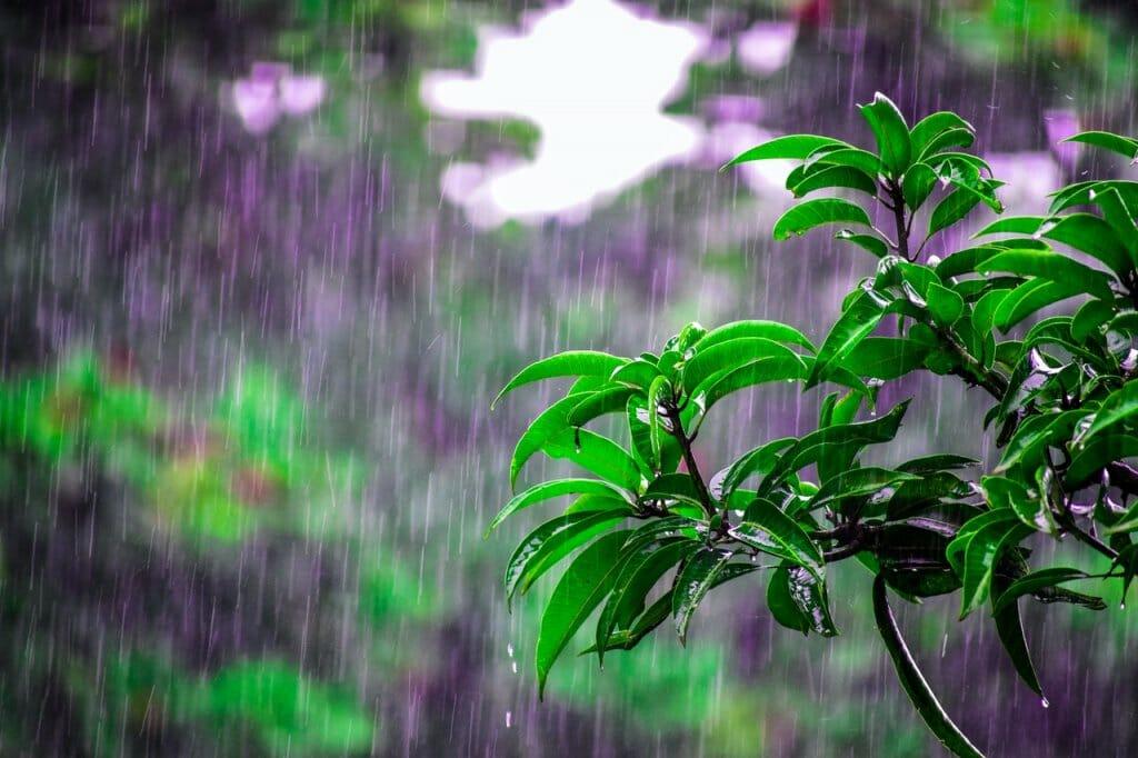 olor a lluvia en el bosque