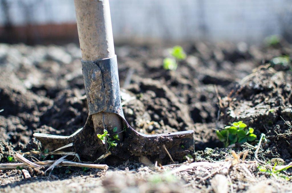 plantar arboles iniciativas sostenibles