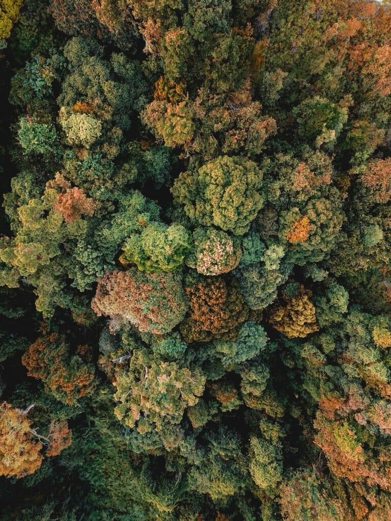 bosque día del libro