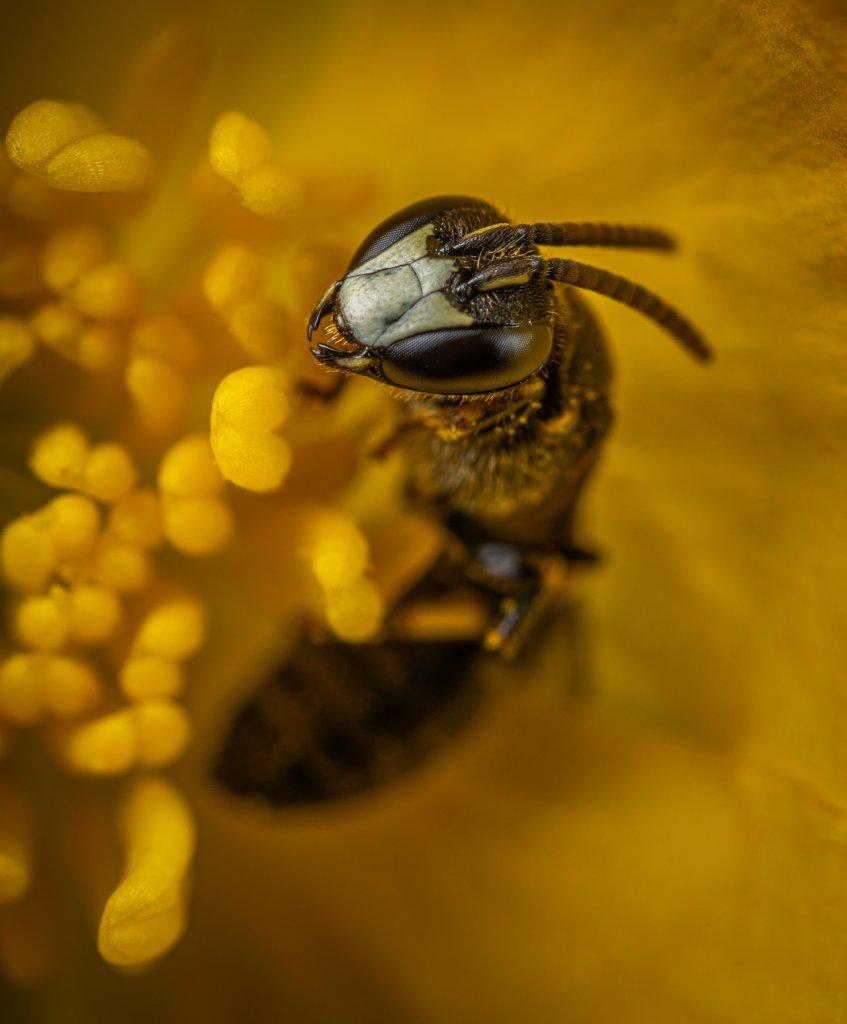Insectos más venenosos