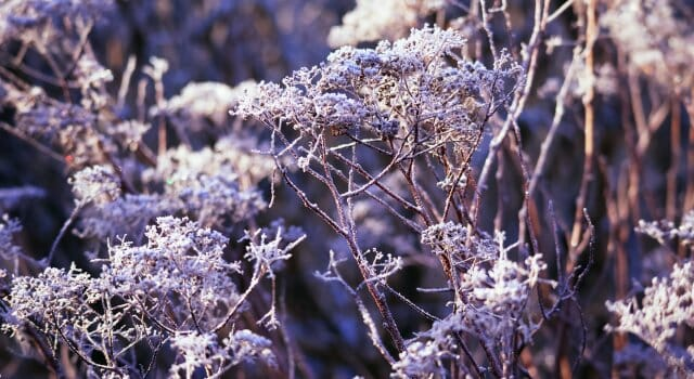 primavera fria europa copernicus