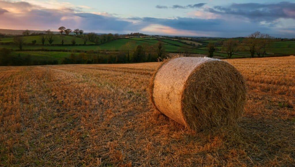 Por qué el suelo es tan importante para los ecosistemas