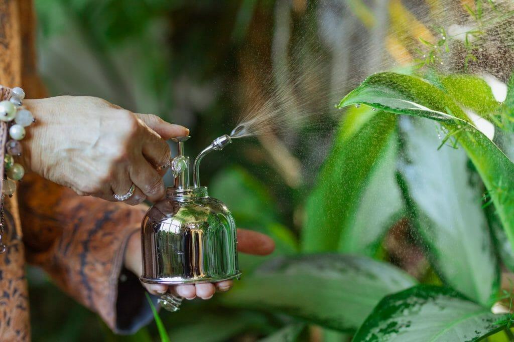 cuidar planta tomillo