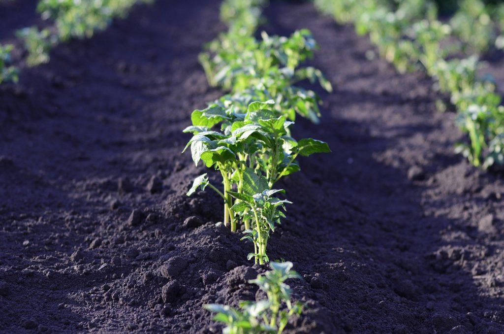 sembrar-septiembre-cultivo-hortalizas (1)