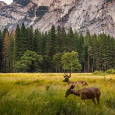Impacto en la flora y la fauna