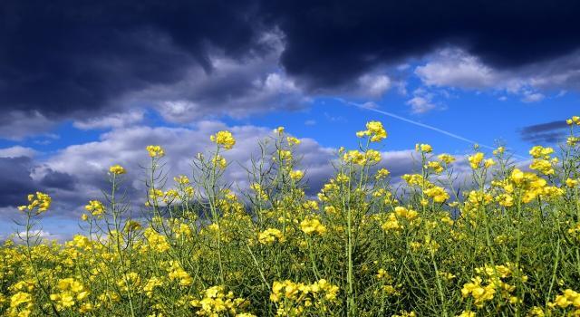 Asma por tormenta: ¿qué es y cómo afecta a los alérgicos?
