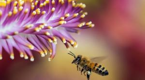 Este es el primer mapa de las abejas del mundo y por qué es tan importante