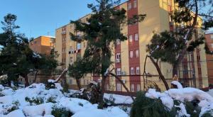 El impacto de Filomena: miles de árboles arrasados y animales afectados