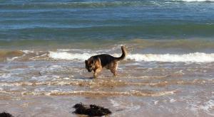 Las mejores playas para perros de España