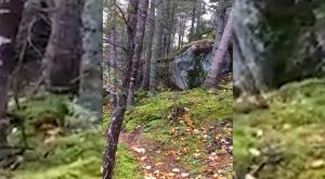 ¿Un bosque que respira? La explicación científica