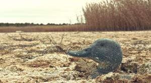 La huella del cambio climático en los humedales de España