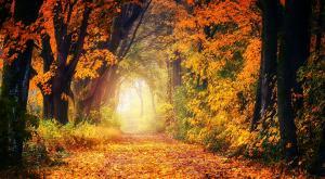 ¿Cuándo empieza el otoño? El día y la hora del nuevo equinoccio