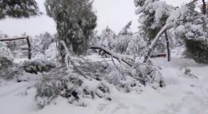 Catástrofe ambiental tras Filomena: más de 800.000 árboles caídos