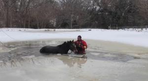 Caballos atrapados y cientos de tortugas aturdidas por el frío: El temporal en Texas se ceba con los animales