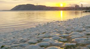 Millones de medusas muertas en playas de todo el mundo