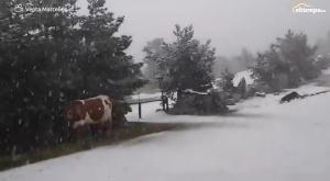 Los mejores vídeos de las nevadas con las que arranca mayo
