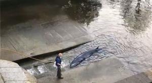 Una ballena aparece en el río Támesis