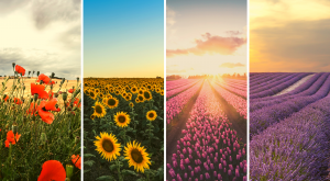 Ruta por los mejores paisajes en flor de España