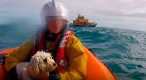 Rescate de una perra tras caer por un acantilado