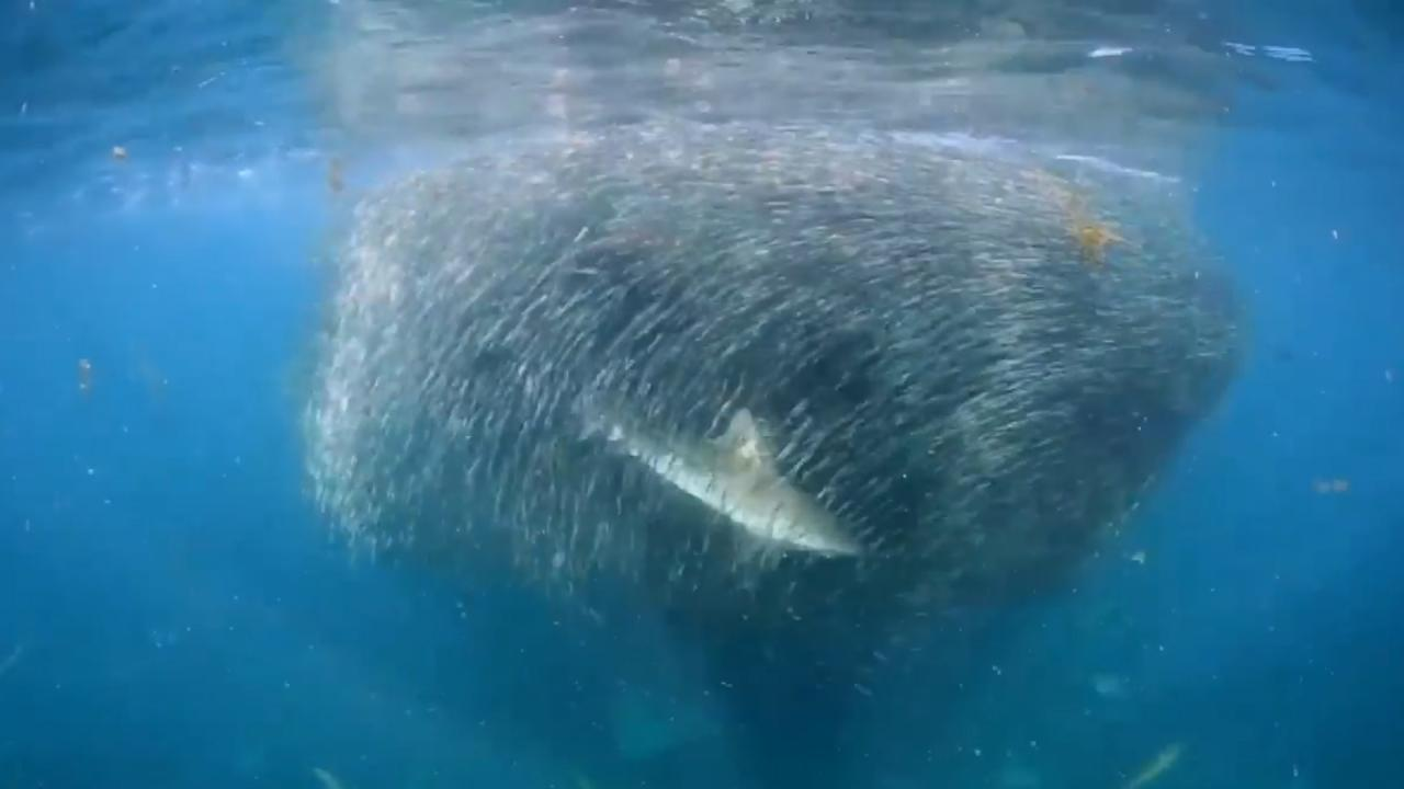 El banco de peces m s grande que hayas visto for Productos para estanques de peces