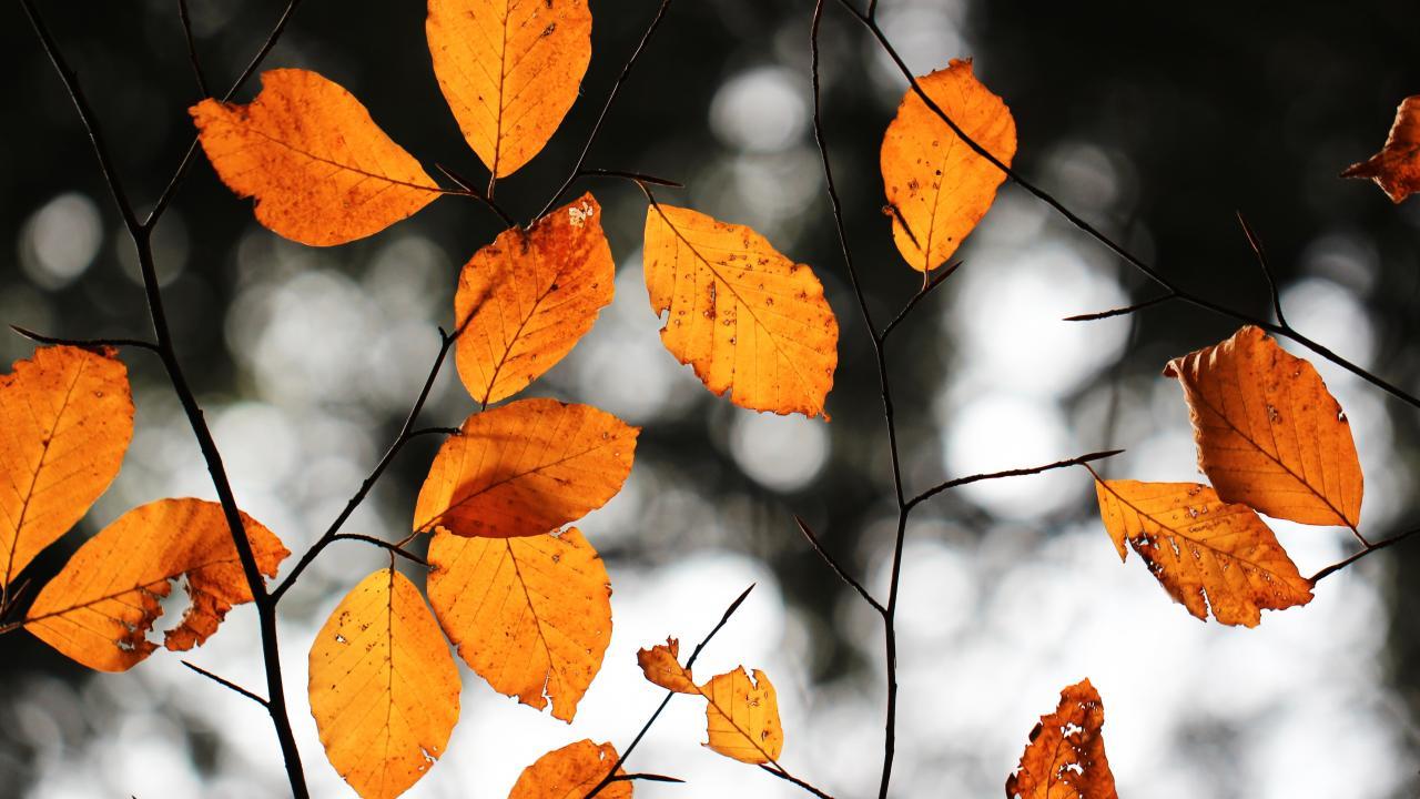 Por qué cambian de color las hojas de los árboles en otoño?