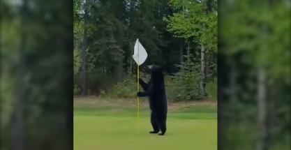 Oso 'asalta' un campo de golf y pasa esto