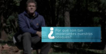 ¿Por qué España tiene cada vez más bosques?