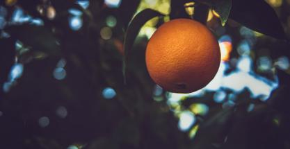 ¿Se puede hacer biogás con zumo de naranja? Sevilla ya lo está probando